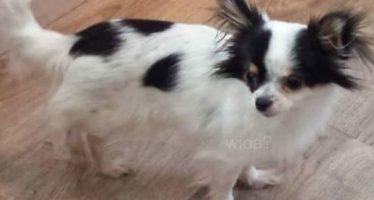 Hond Sjarel vermist in Heksenberg!