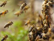 Bijenpoep in Heerlen?!
