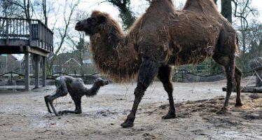 Je kunt een dier adopteren bij Kasteelpark Born